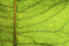 一片织地不很细和鲜绿色的植物叶子的宏观照片 免版税库存照片