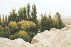 一片绿洲的苍白照片在沙漠 免版税库存图片
