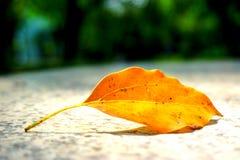 一片黄色叶子在春天 库存图片