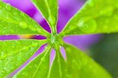 一片绿色叶子的宏指令 库存图片