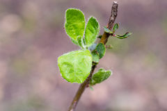 一片绿色叶子的宏观射击 免版税库存照片