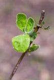 一片绿色叶子的宏观射击 库存图片