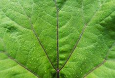 一片绿色叶子的宏观照片有雨珠的 库存照片