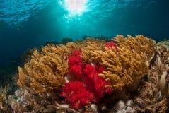 一珊瑚海scape,印度尼西亚 库存图片