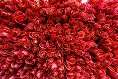 一百朵桃红色玫瑰 库存图片
