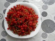 一碗红浆果 免版税库存图片