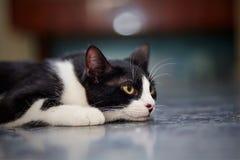 一种哀伤的猫黑白颜色的画象 库存照片