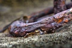 一种老生锈的金属的细节在Guilvin老港口敲响 免版税库存图片