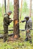 一种耻辱的设施在一棵树的切开的木柴的 免版税库存图片