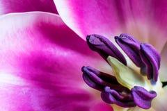 一紫色花卉生长强 库存图片