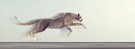 一美好猎豹跑 库存图片