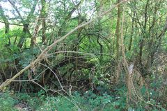 一美好的森林天在市场上 免版税库存图片