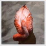 一群桃红色火鸟的顶视图 免版税图库摄影