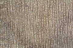 一老破裂的ruberoid的安心纹理类似树或皮肤,抽象背景的吠声 库存图片
