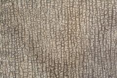 一老破裂的ruberoid的安心纹理类似树或皮肤,抽象背景的吠声 图库摄影