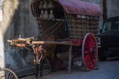 一老oxcart在加勒,斯里兰卡 免版税库存图片
