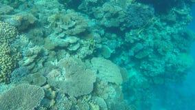 一能看到鱼和珊瑚在海底上 股票视频