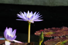 一自然的花卉秀丽的 免版税库存照片