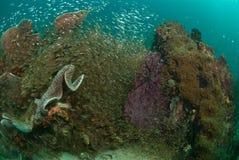 一般礁石场面,王侯Ampat,印度尼西亚 免版税库存图片