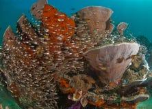 一般礁石场面,王侯Ampat,印度尼西亚 免版税库存照片