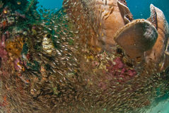 一般礁石场面,王侯Ampat,印度尼西亚 库存照片