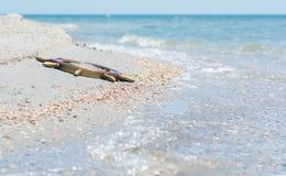 一艘被淹没的船的方向盘被投掷对海的岸反对波浪背景, 库存照片