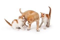 一起两只小猫和小狗在白色 图库摄影