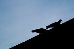 一起两只鸟 免版税图库摄影