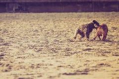 一起使用在海滩的两条杂种狗 库存图片