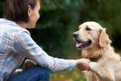 一起使用宠物金毛猎犬和的所有者外面 库存照片