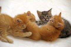一起四只小猫 库存照片