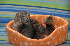 一起四只镶边小猫 免版税库存图片