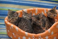 一起四只镶边小猫 库存照片