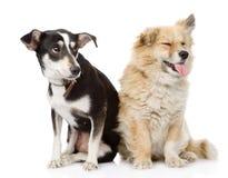 一起坐两条的狗 背景查出的白色 免版税图库摄影