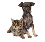 一起坐小猫的小狗 库存图片