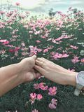 一起夫妇背景波斯菊花园愉快的华伦泰 图库摄影