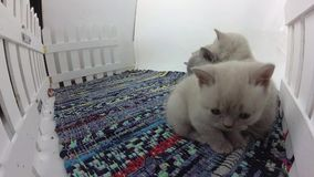 一起小猫 影视素材
