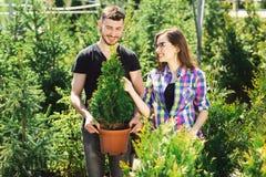 一起年轻夫妇身分,拿着有一棵小杉树的一个罐和在园艺中心看一棵植物 免版税图库摄影