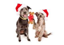 一起庆祝圣诞节的狗 免版税库存照片