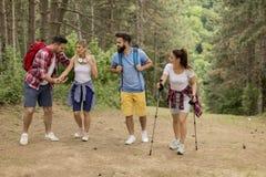 一起步行通过森林的愉快的年轻小组 免版税库存图片