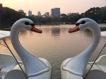 一起漂浮象心脏形状的两条天鹅小船样式 库存照片