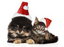 一起猫和狗在圣诞节帽子的白色 库存照片
