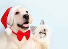 一起猫和狗, neva化妆舞会小猫,金毛猎犬看权利 与圣诞节帽子和弓的小狗 心情新年度 免版税库存照片