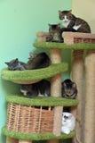一起猫在动物庇护所的席子在猫的操场 免版税图库摄影