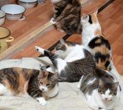 一起猫在动物庇护所的席子 库存图片