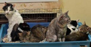 一起猫在动物庇护所的席子 免版税库存照片