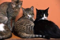 一起猫在动物庇护所的席子 免版税库存图片