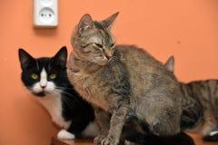 一起猫在动物庇护所的席子 库存照片