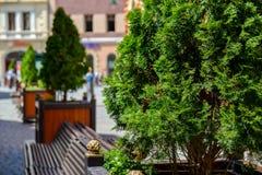 一起盆的树和长凳 免版税库存照片