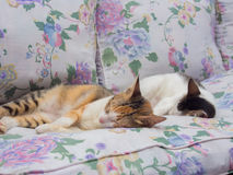 一起睡觉两只的猫 免版税图库摄影
